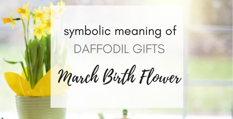 SYMBOLIC MEANING OF DAFFODILS MARCH BIRTH FLOWER GIFT IDEAS
